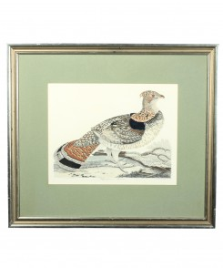 Ruffed Grouse or Pheasant