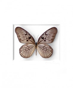 Champagne Ricepaper Butterfly