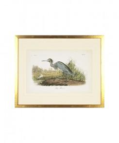 Blue Heron Audubon Print
