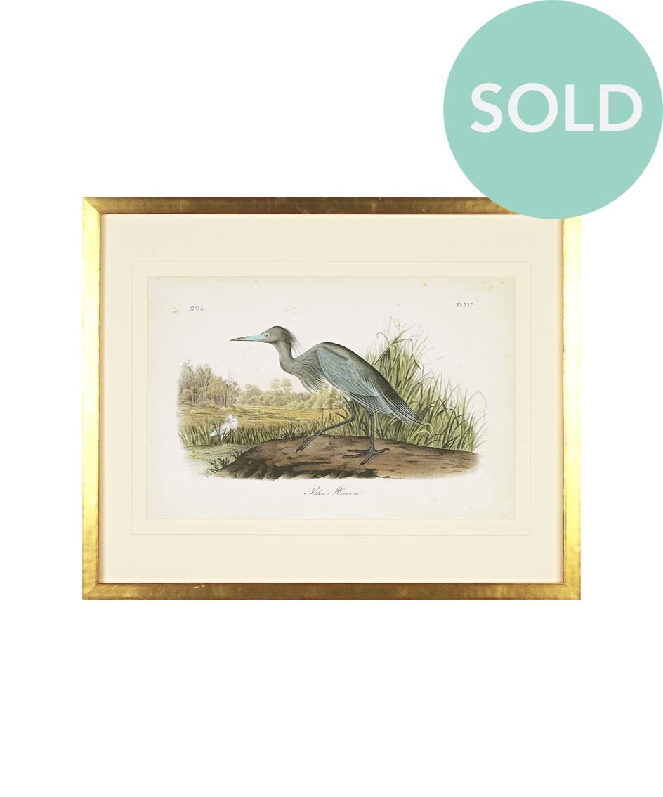 Blue_Heron_Audubon_Print