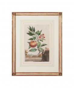 Munting Fruit Prints, Set of Two